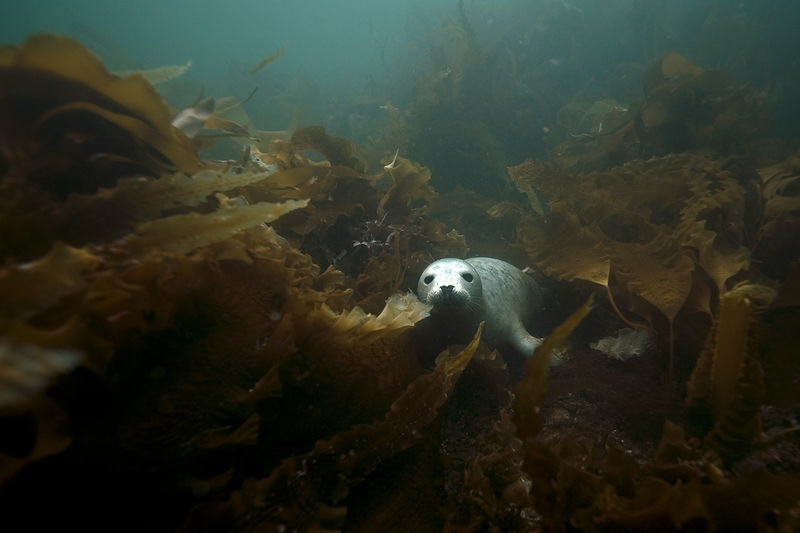 Ein Taucher verstand nicht, was diese Seehunde wollten