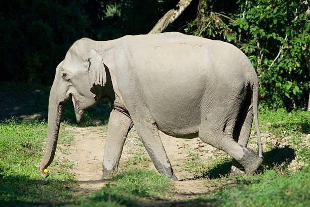 Incroyable : cet éléphant a passé plus de 11 heures à creuser