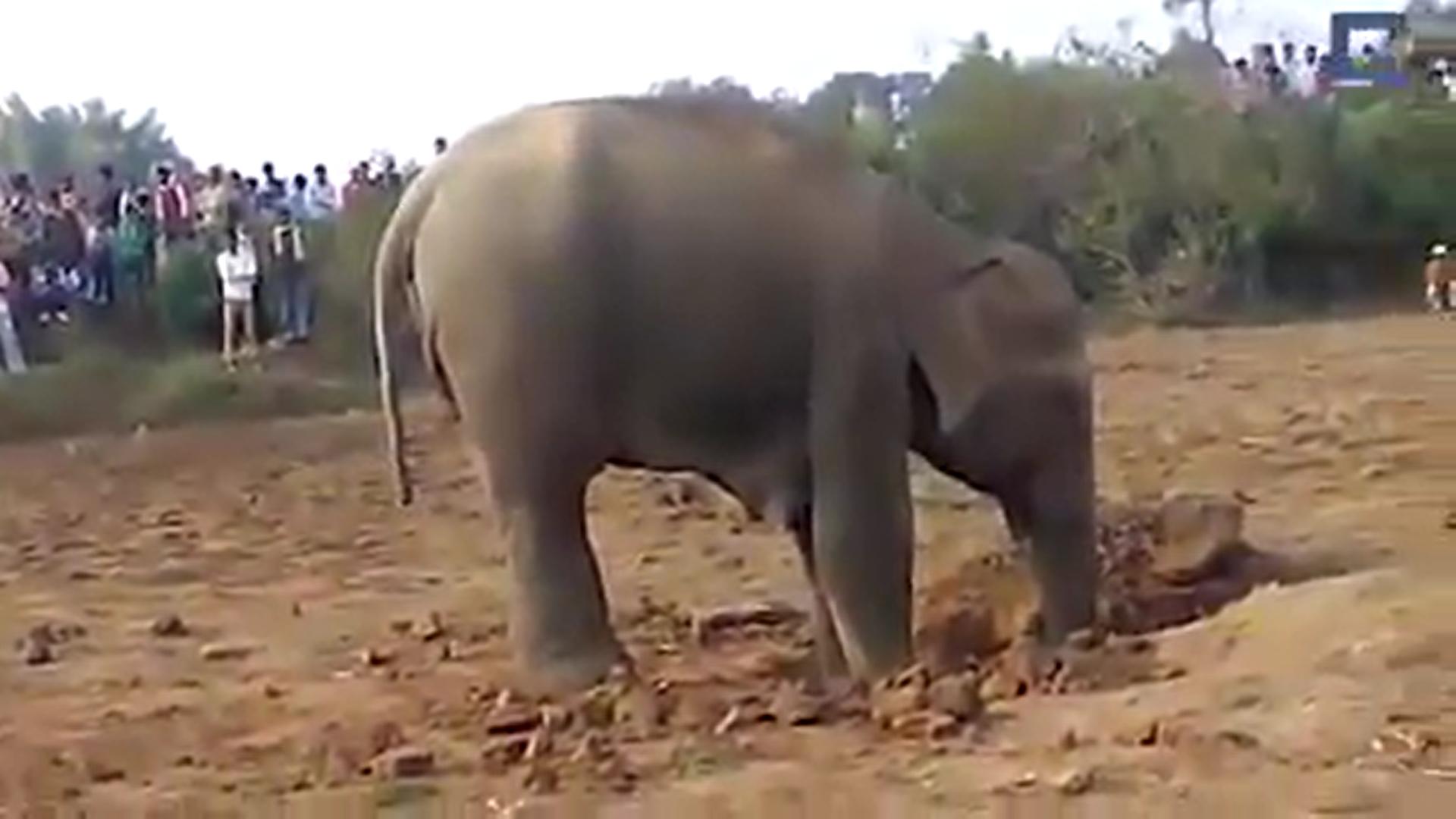 Le comportement de l'éléphant commençait à inquiéter les villageois