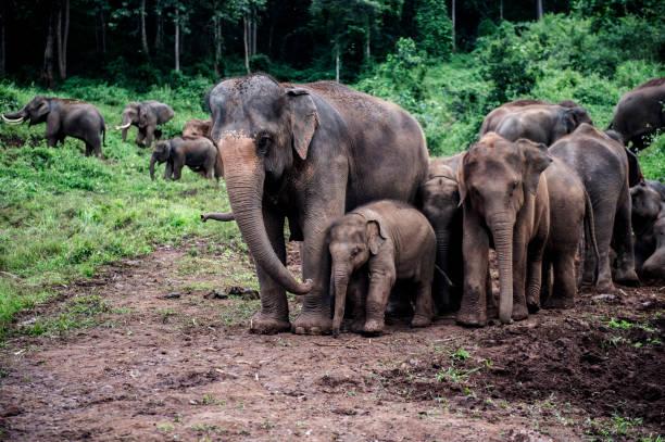 L'incroyable histoire de cet éléphant
